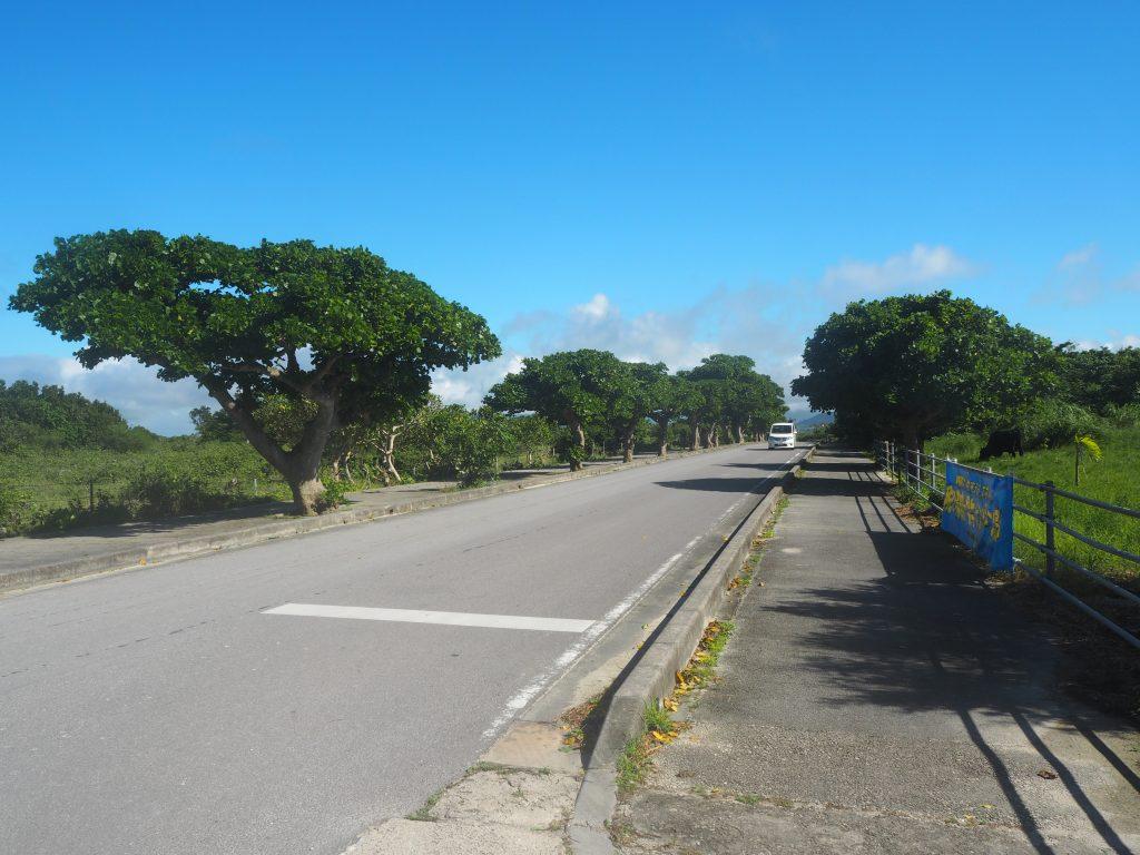 集落から竹富港へと続く舗装道路を歩く