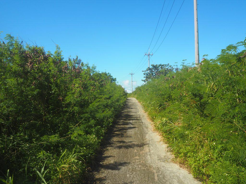 素朴な一本道を歩く