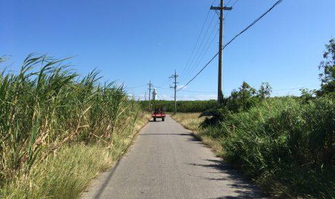 ザ・沖縄な風景