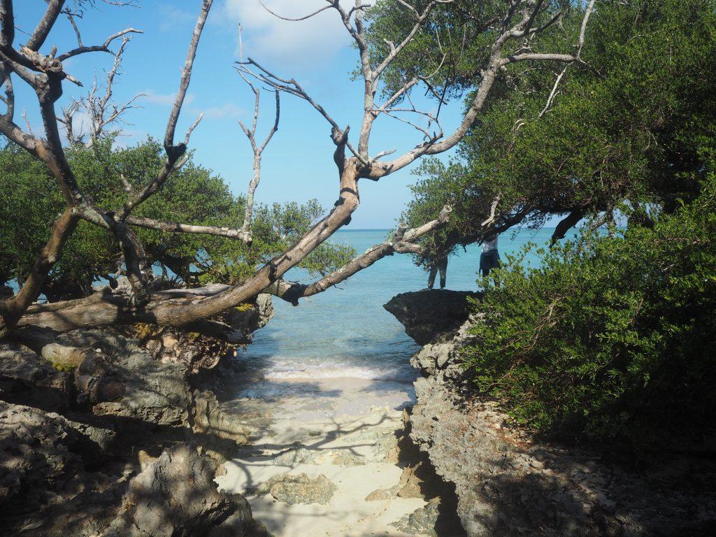 浜シタン群落の岩場