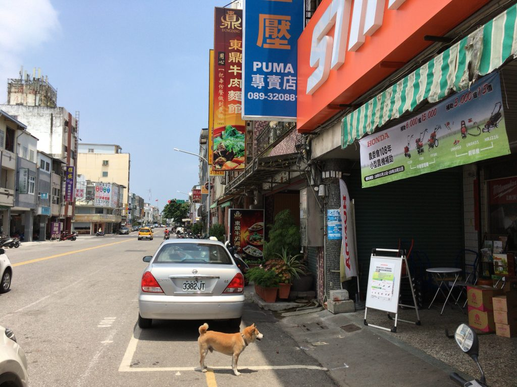いらっしゃいませワン。しかし台湾東部には犬が多いな