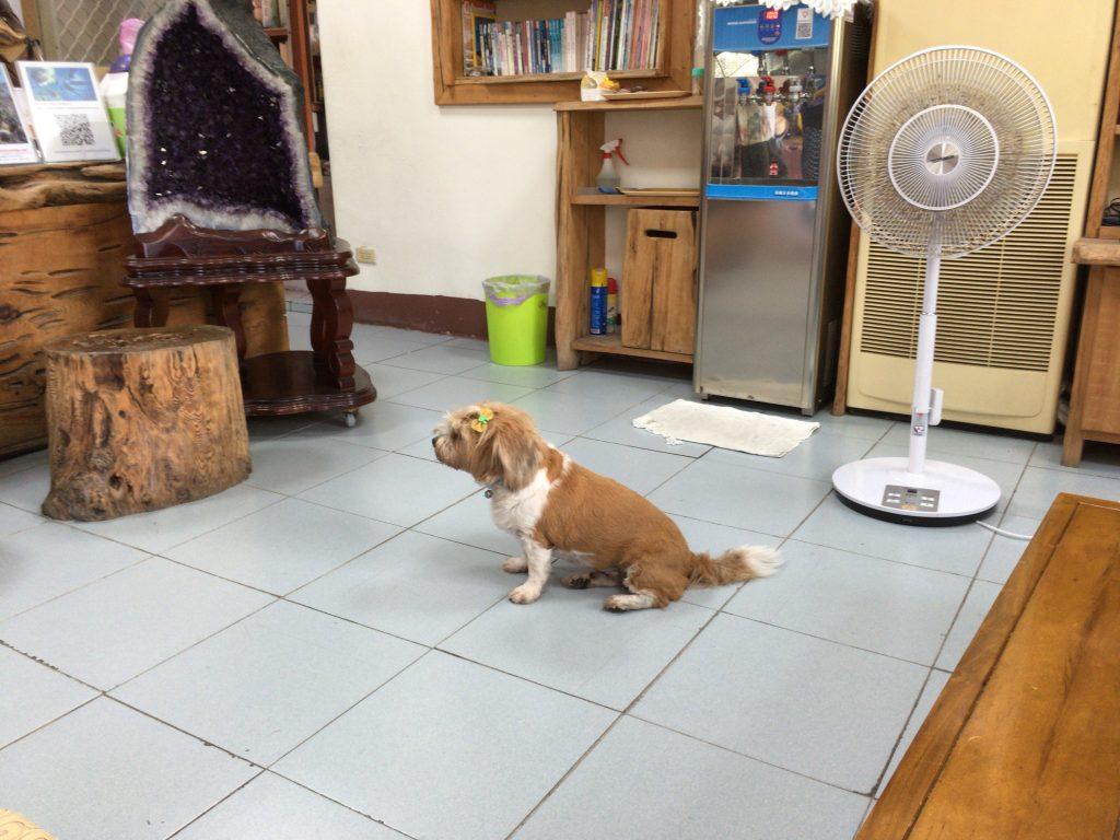 台湾は暑いワン
