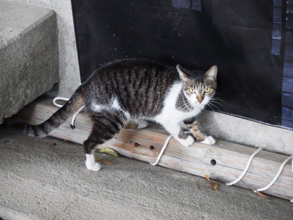 1匹の猫がついてきた。にゃんだお前