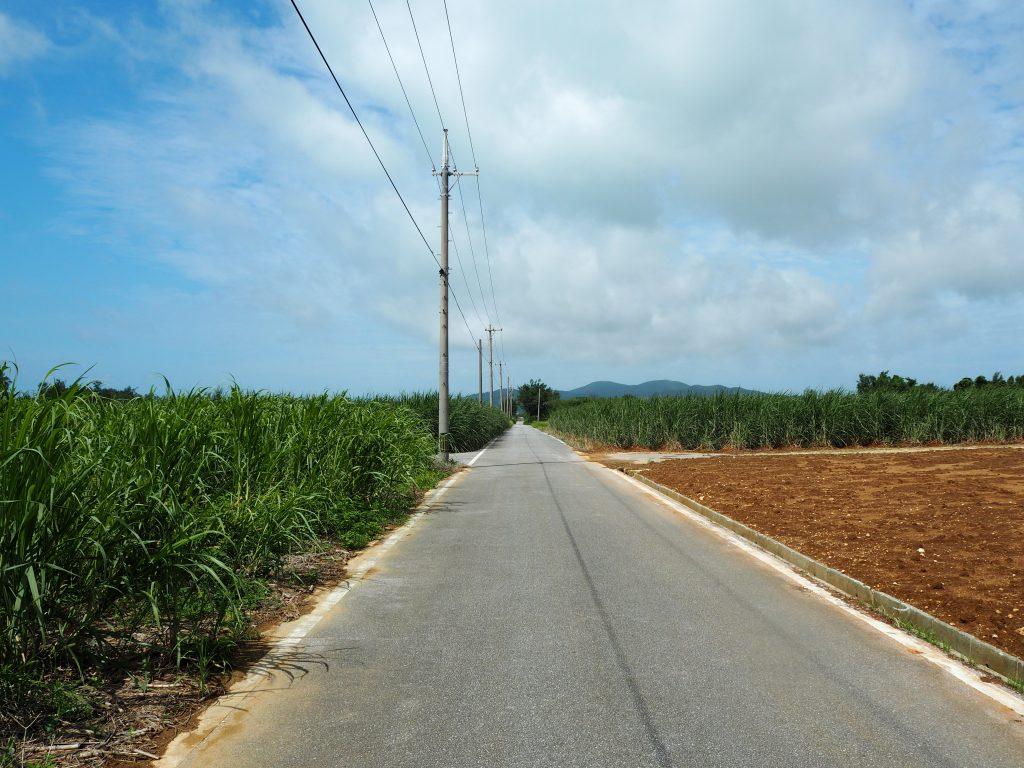 さとうきび畑と等間隔に立ち並ぶ電柱。これぞ沖縄な風景