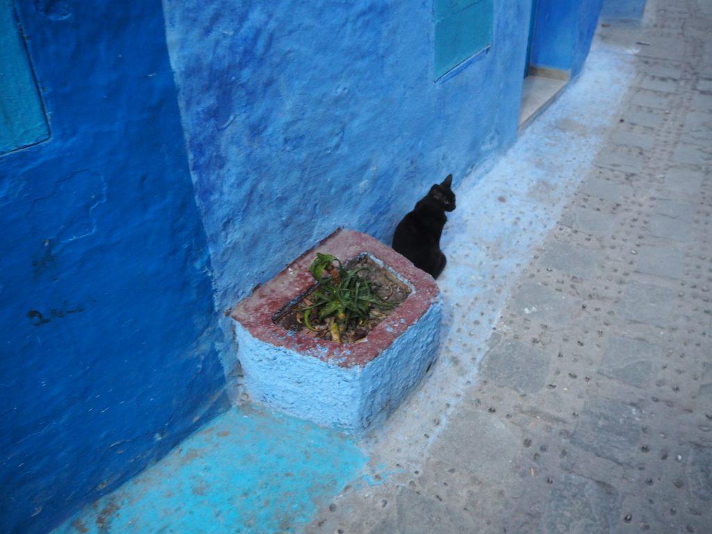 一匹狼的な格好良い黒猫