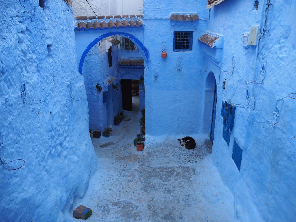 アーチが印象的な青い街並み。たまにフェイントで犬に遭遇する