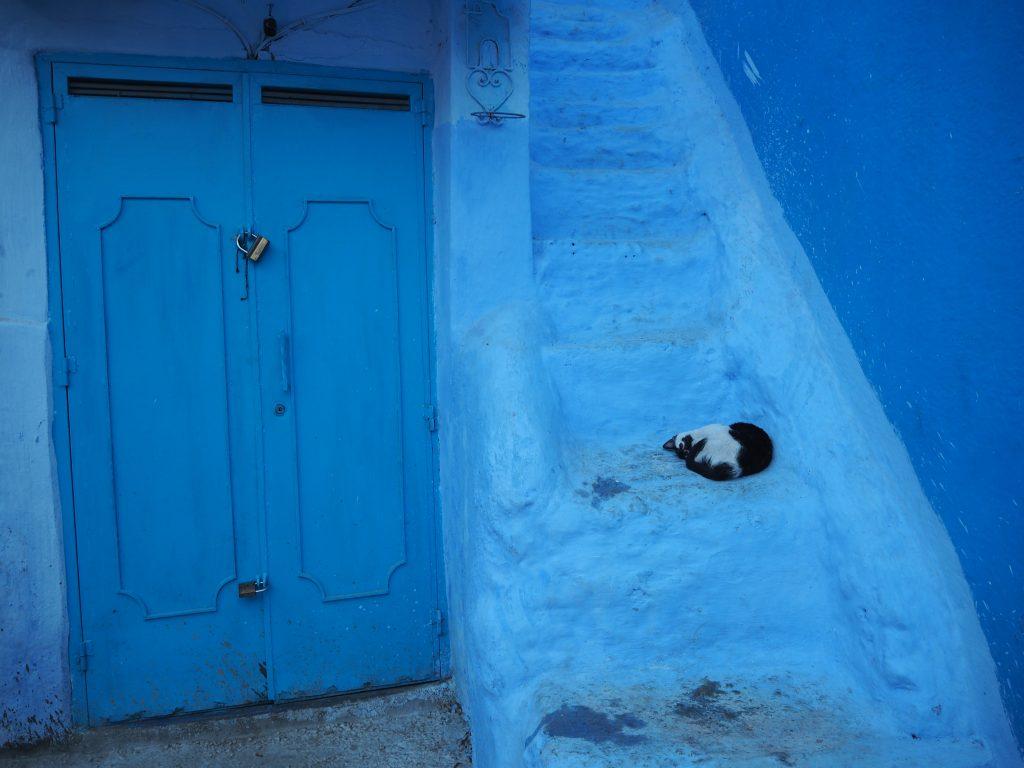 青色と猫が魅力的なシャウエン