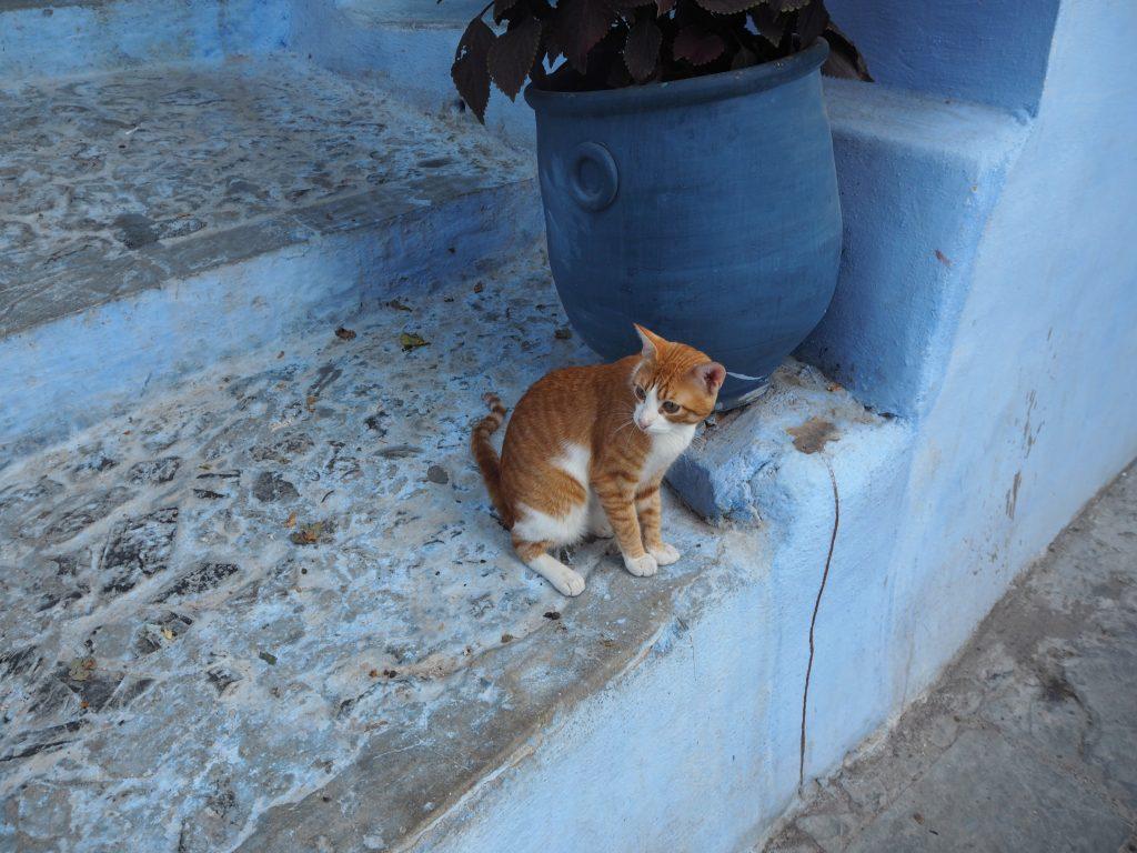 美人な猫さんだ