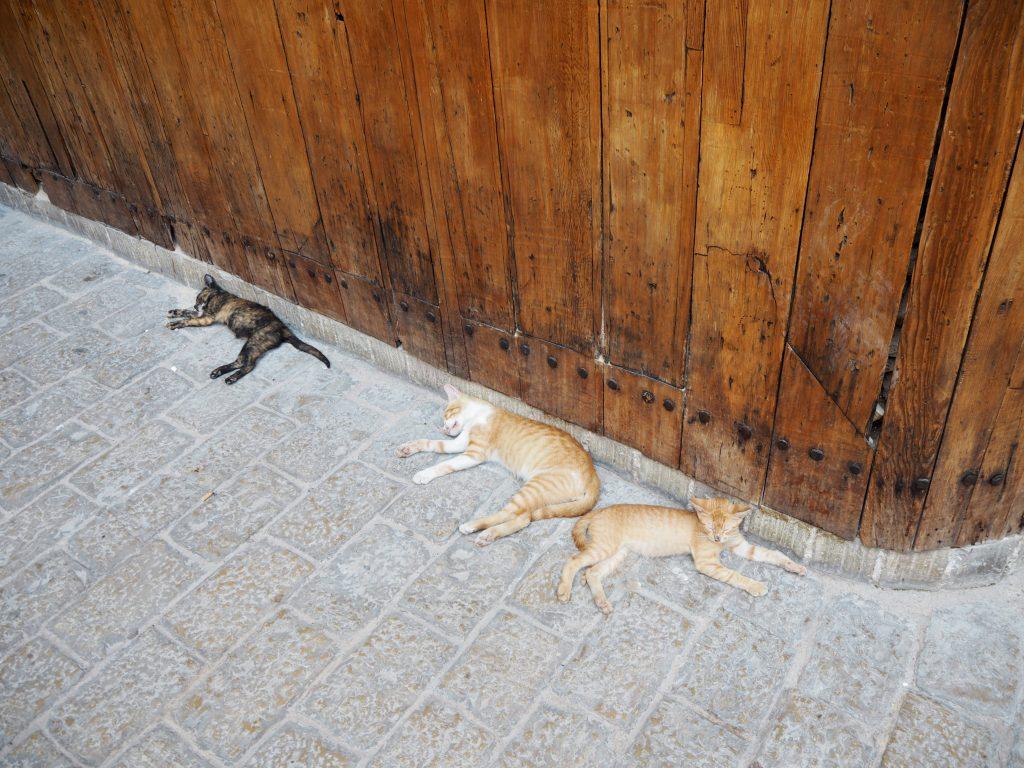 ネジャーリン広場に横たわるネコ3匹