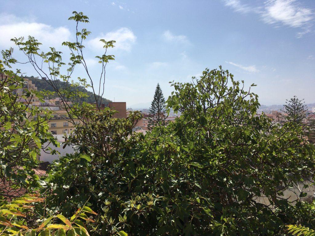 ガーデンから市街地を望む。木が邪魔だな
