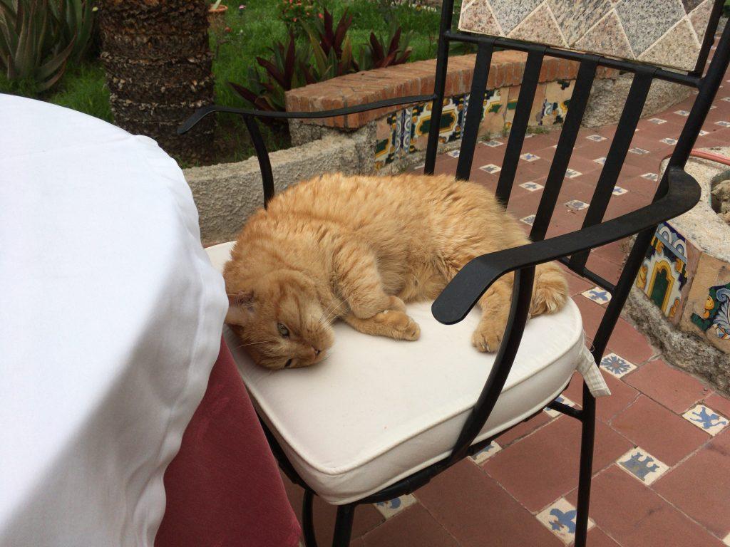 朝食を食べているとネコが寄ってくる