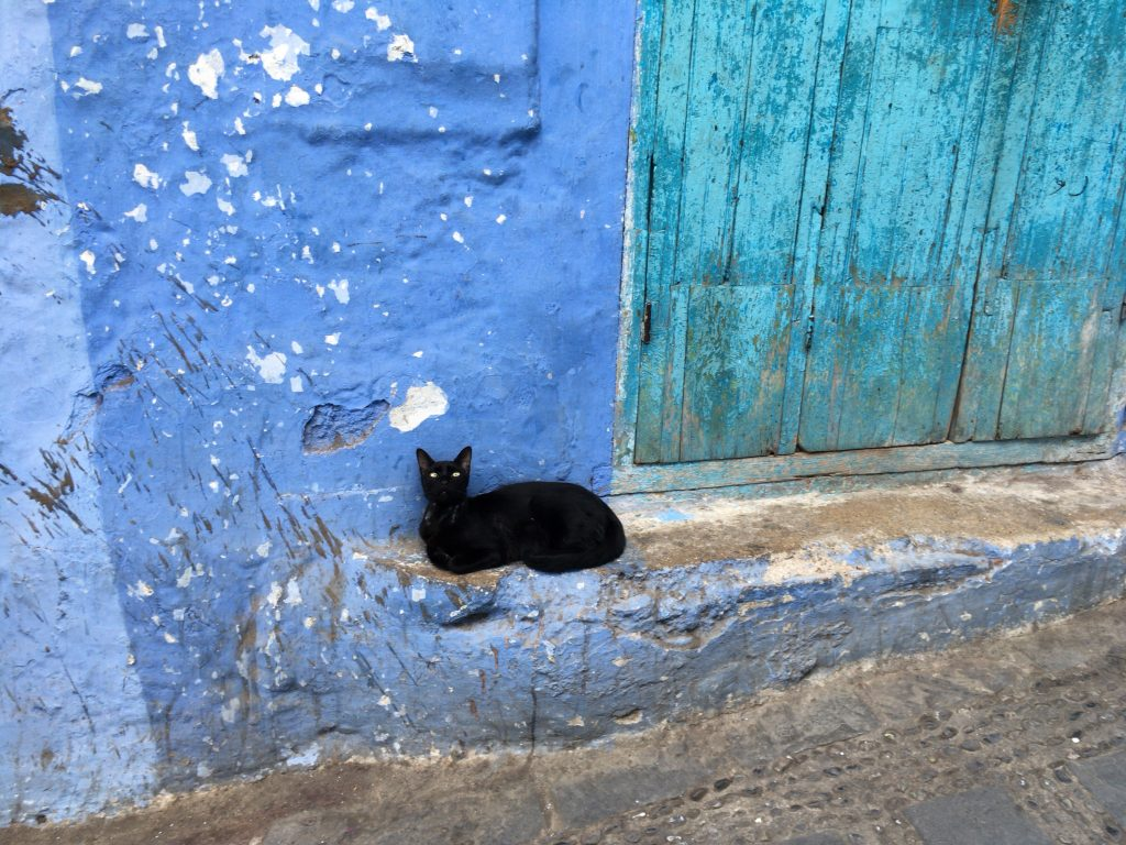 シャウエンの青い街と黒い猫。モロッコで数少ない癒しである