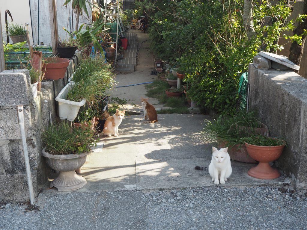 渡嘉敷島はなんだかやさぐれたネコが多い。にゃんだお前