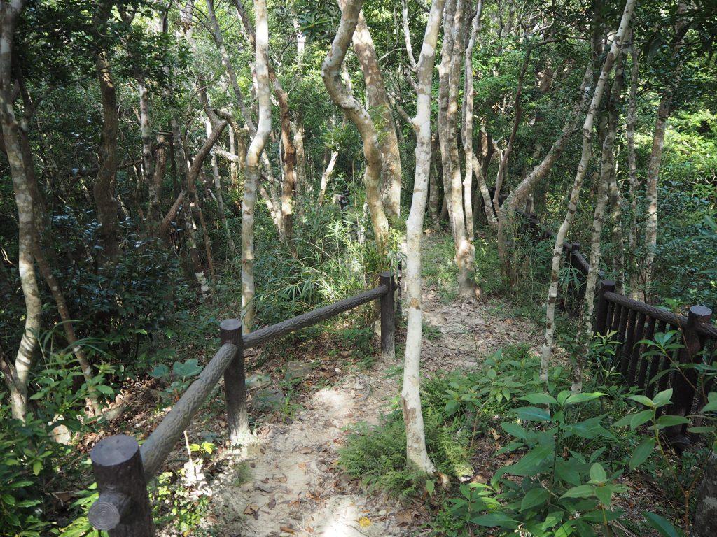 集団自決があった林の中を進む。ハブに注意